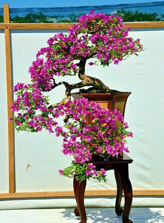 Arbusto en Maceta