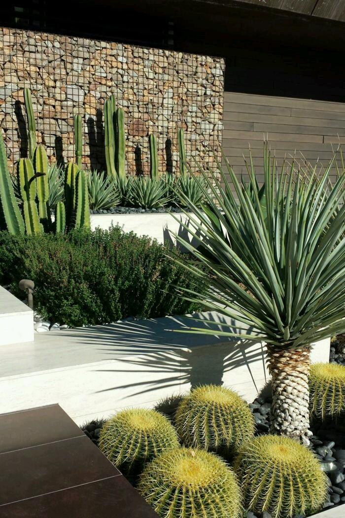 Jardín Externo con Cactus