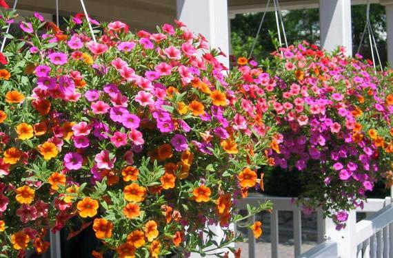 Jardin Colgante Con Flores Coloridas