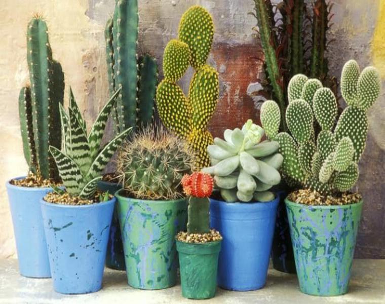 08 cactus y suculentas