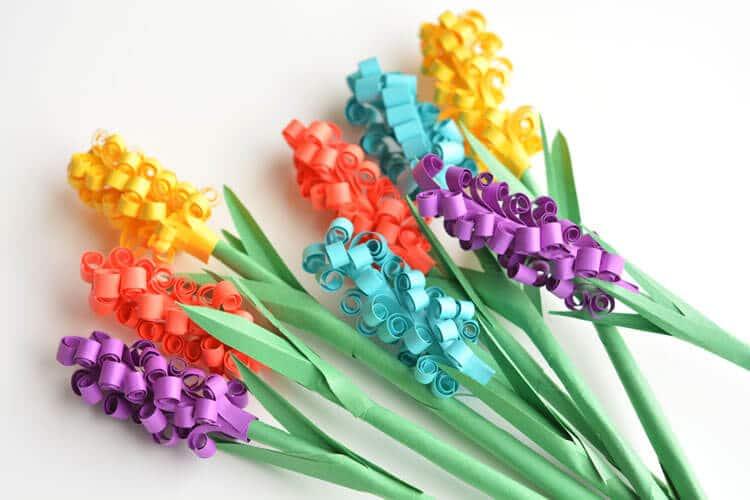 Jacintos Multicolores