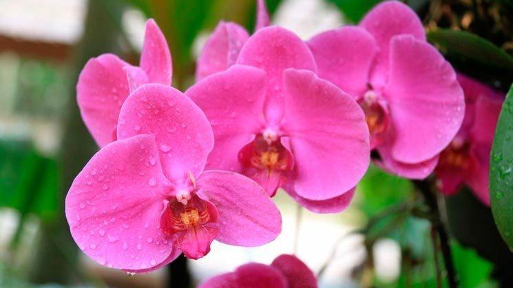 bellas orquideas