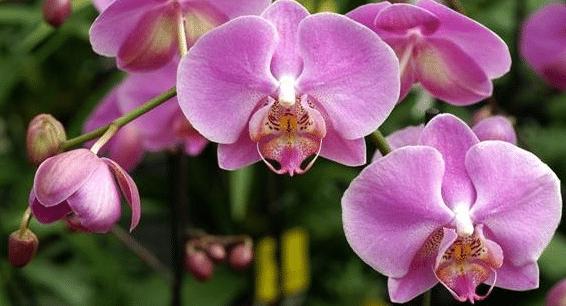 cuidado de orquideas