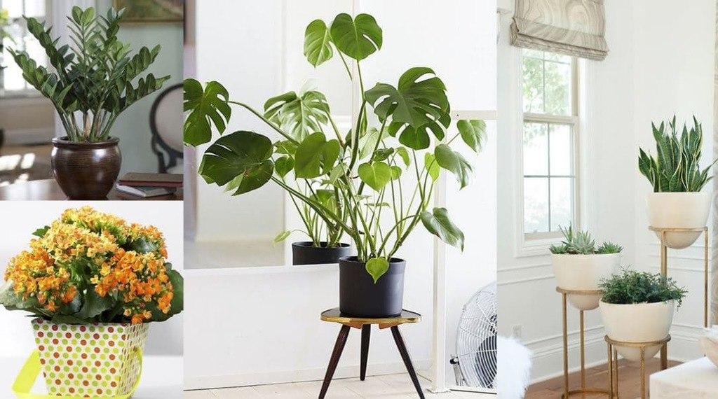 plantas que absorben