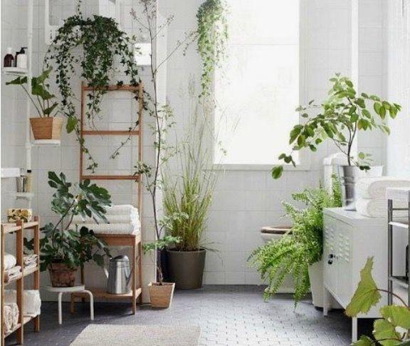 plantas que absorben humedad