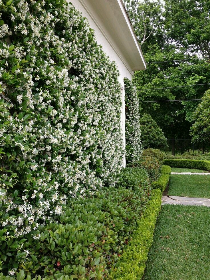 Arbustos para jard n 31 ideas para escoger el tuyo for Arbustos para patios