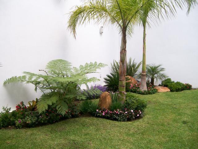 Arbustos para jard n 31 ideas para escoger el tuyo for Palmeras pequenas para jardin