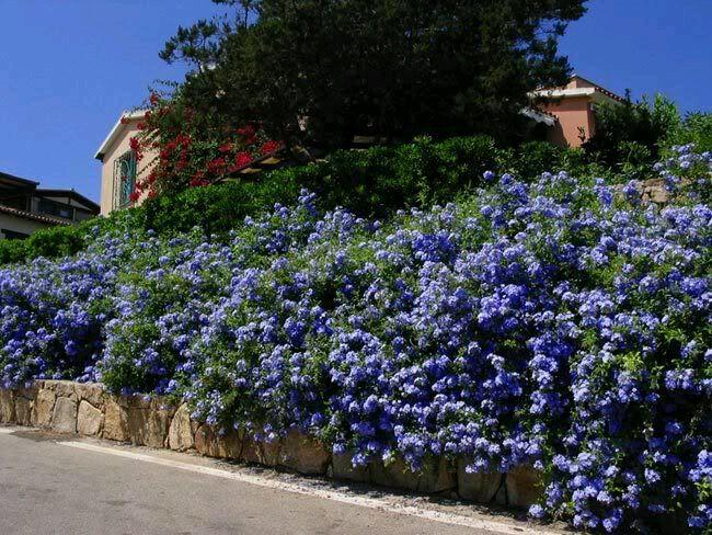 arbustos para jardín: 31 ideas para escoger el tuyo - estreno casa