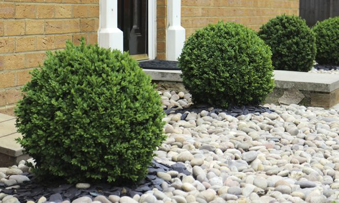 Arbustos para jard n 31 ideas para escoger el tuyo for Arbustos enanos para jardin