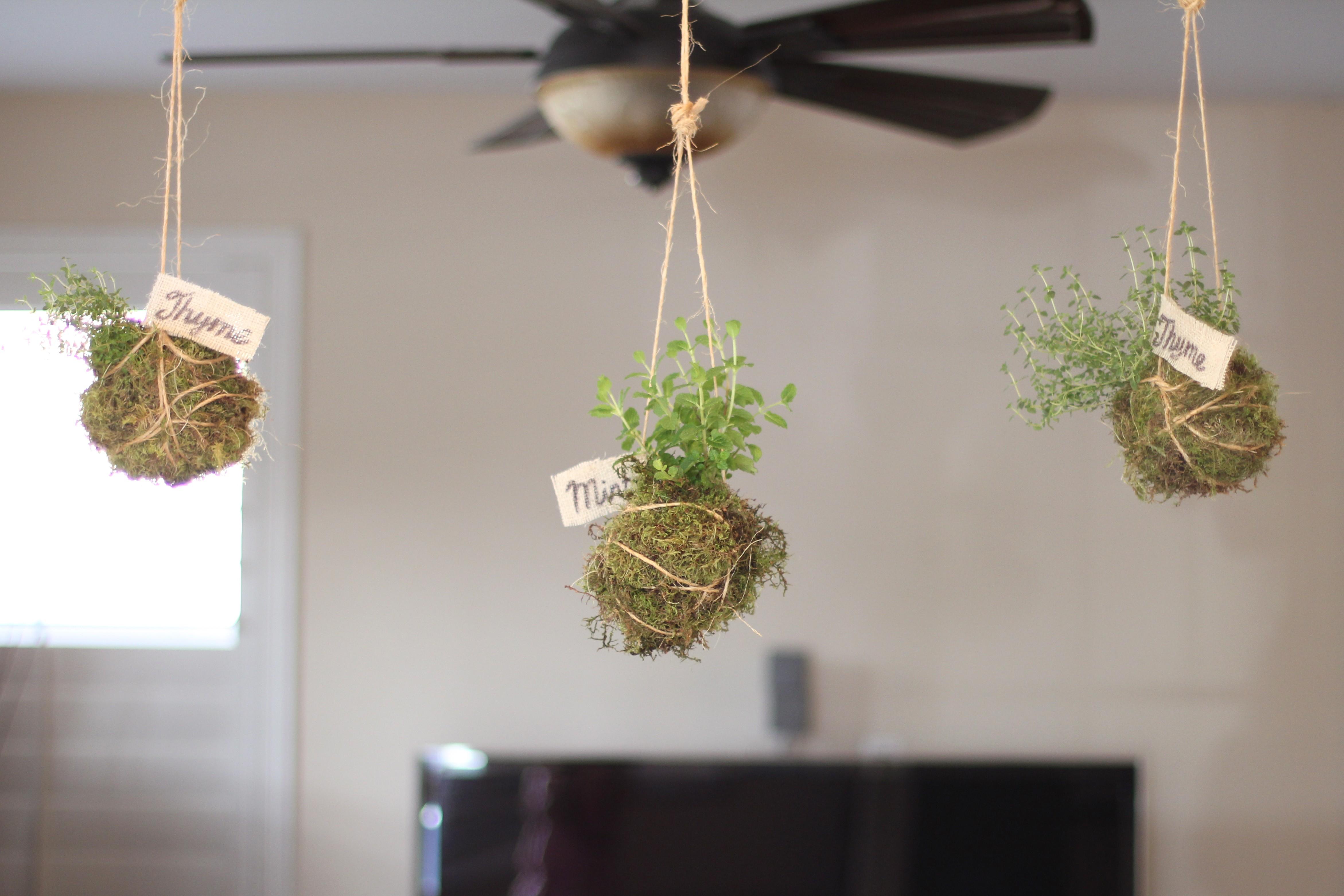 Ideas para decoraci n de jardines internos estreno casa for Arbustos de interior