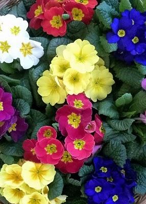 Imagenes de flores bonitas beautiful ramo de flores for Mulas mecanicas baratas