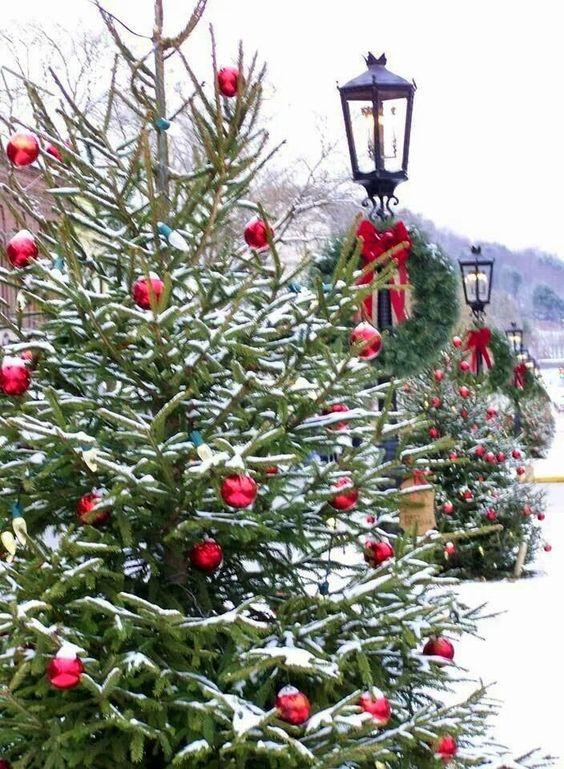 arbol de navidad natural exterior