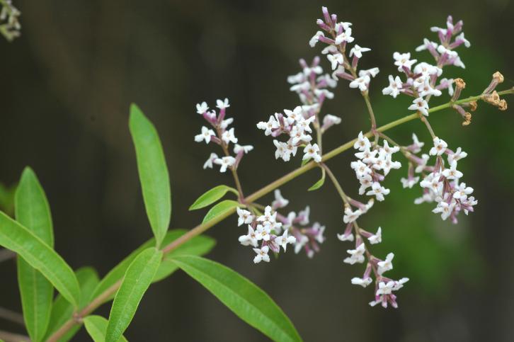 Galer a con 31 fotos de plantas de exterior resistentes for Arbustos de exterior resistentes