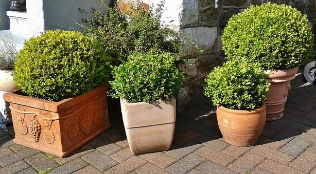 Galer a con 31 fotos de plantas de exterior resistentes for Plantas de exterior sin sol