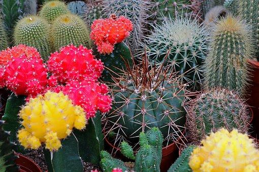 Galer a con 31 fotos de plantas de exterior resistentes - Tipos de plantas de exterior ...