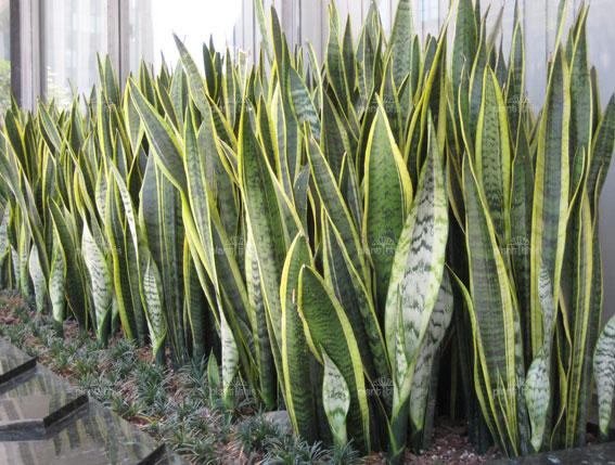 Galer a con 31 fotos de plantas de exterior resistentes - Plantas terraza mucho sol ...