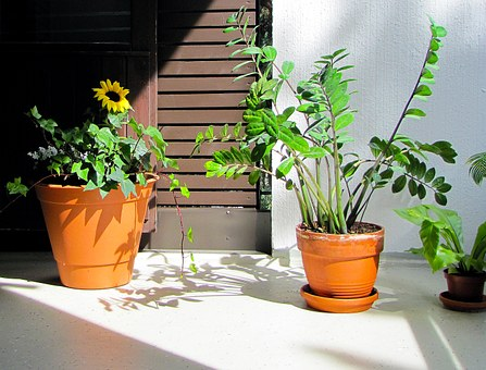 Galería Con 31+ Fotos de Plantas de Exterior Resistentes - Estreno Casa