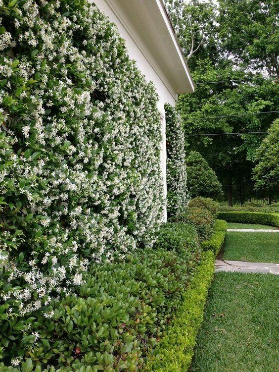 20 plantas trepadoras con flor que debes tener en casa for Plantas trepadoras para muros