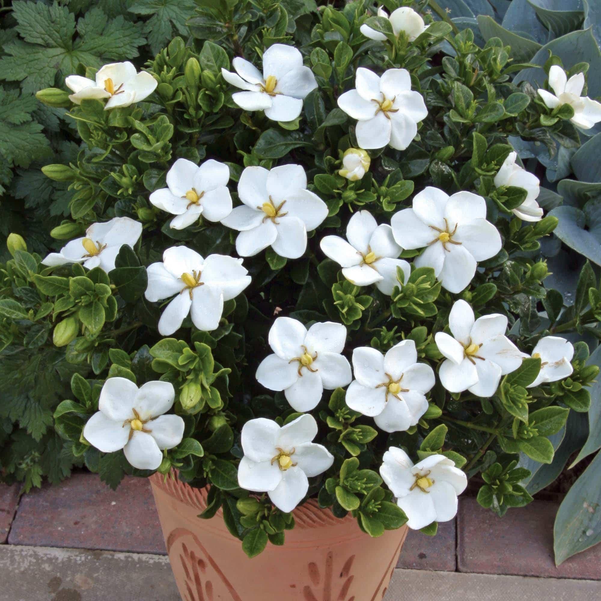 las mejores plantas de sombra para un jardín de lujo