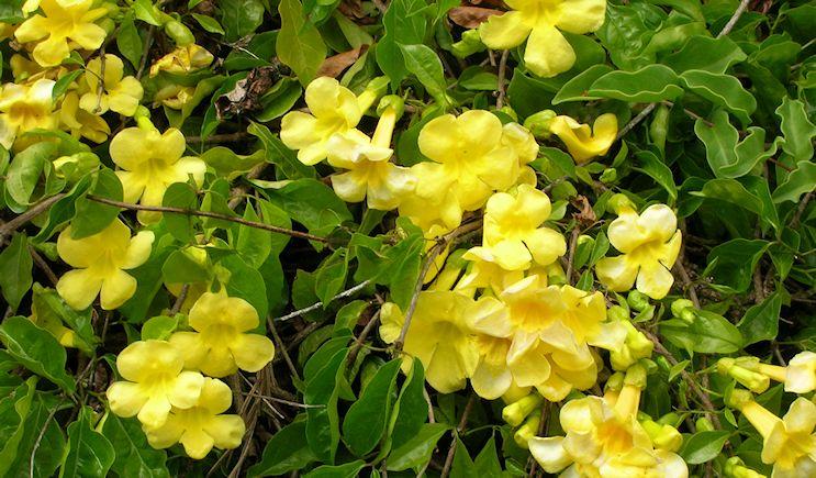 20 Plantas Trepadoras Con Flor Que Debes Tener En Casa Estreno Casa