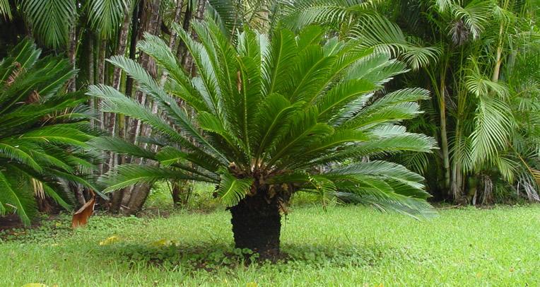 Las Mejores Plantas de Sombra Para un Jardín de Lujo - Estreno Casa