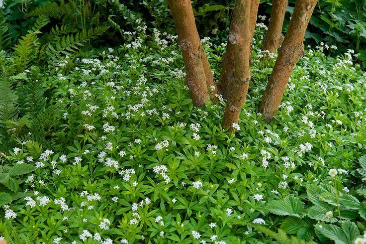 Las Mejores Plantas De Sombra Para Un Jardin De Lujo Estreno Casa - Plantas-exterior-sombra