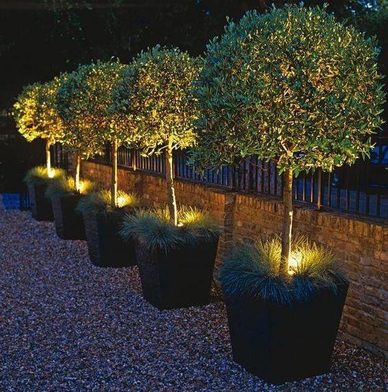 54 iluminación plantas
