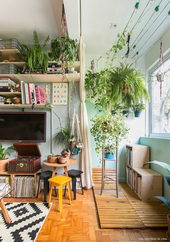 Tipos de plantas de interior para poca luz estreno casa for Plantas decorativas de interior con poca luz