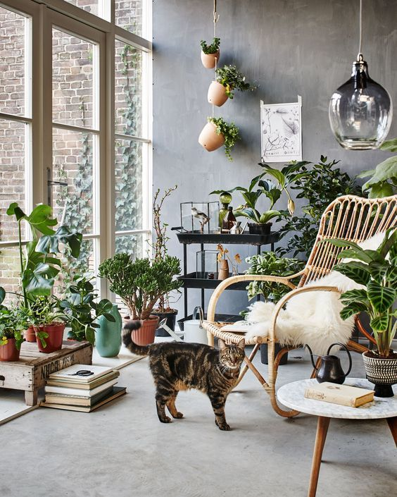 Tipos de plantas de interior para poca luz estreno casa for Plantas de interior con poca luz