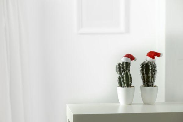 decoracion-de-navidad-para-el-hogar-cactus-istock