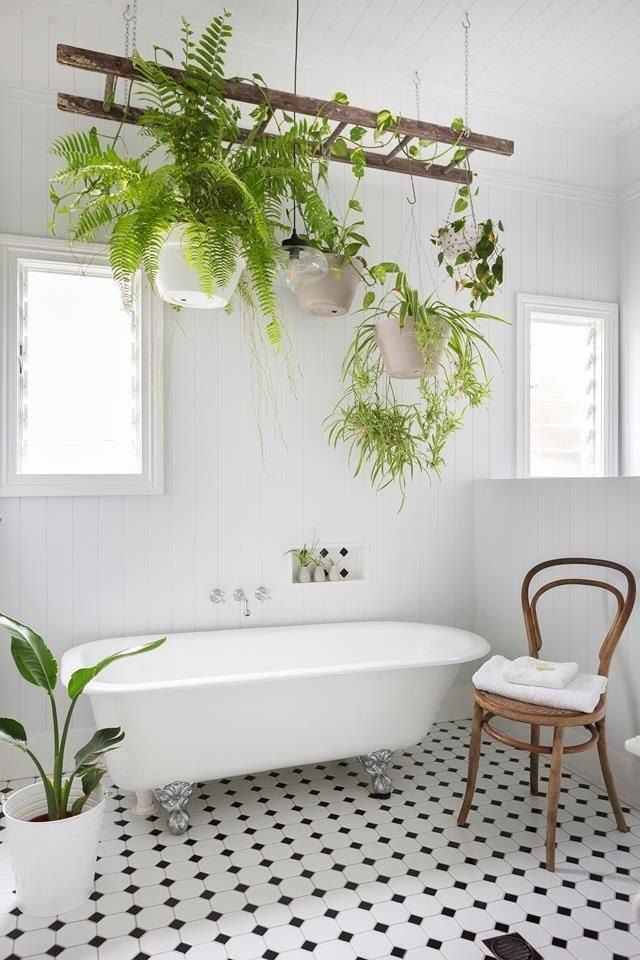 Las plantas colgadas en una escalera aprovechan la humedad del baño