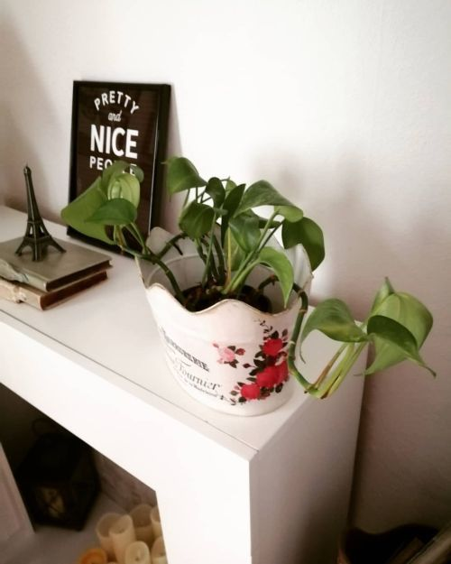 Chimenea decorada con plantas
