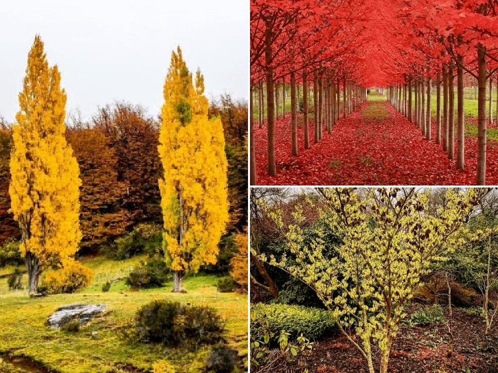 Los árboles más bonitos de otoño