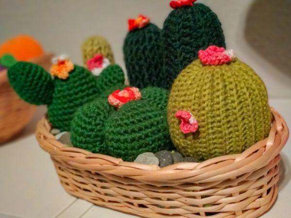 Cactus de lana
